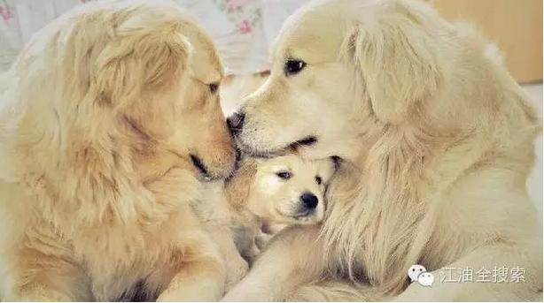 可爱动物吵架动态